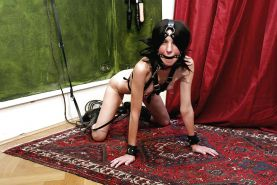 BDSM Pet Play #25514151